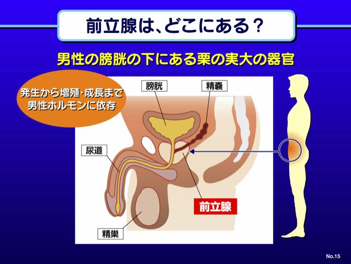 前立腺はどこにある?